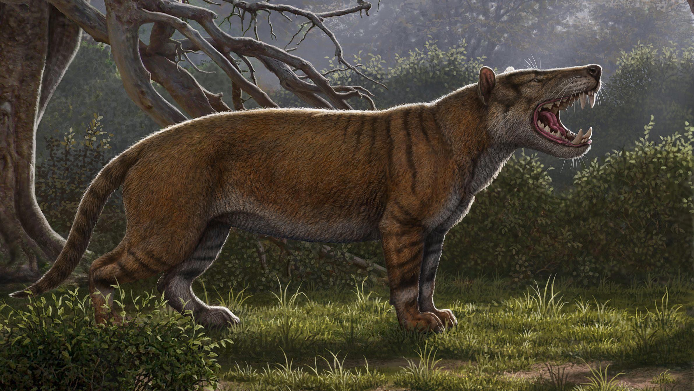'Big lion' fossil found in Kenya museum drawer