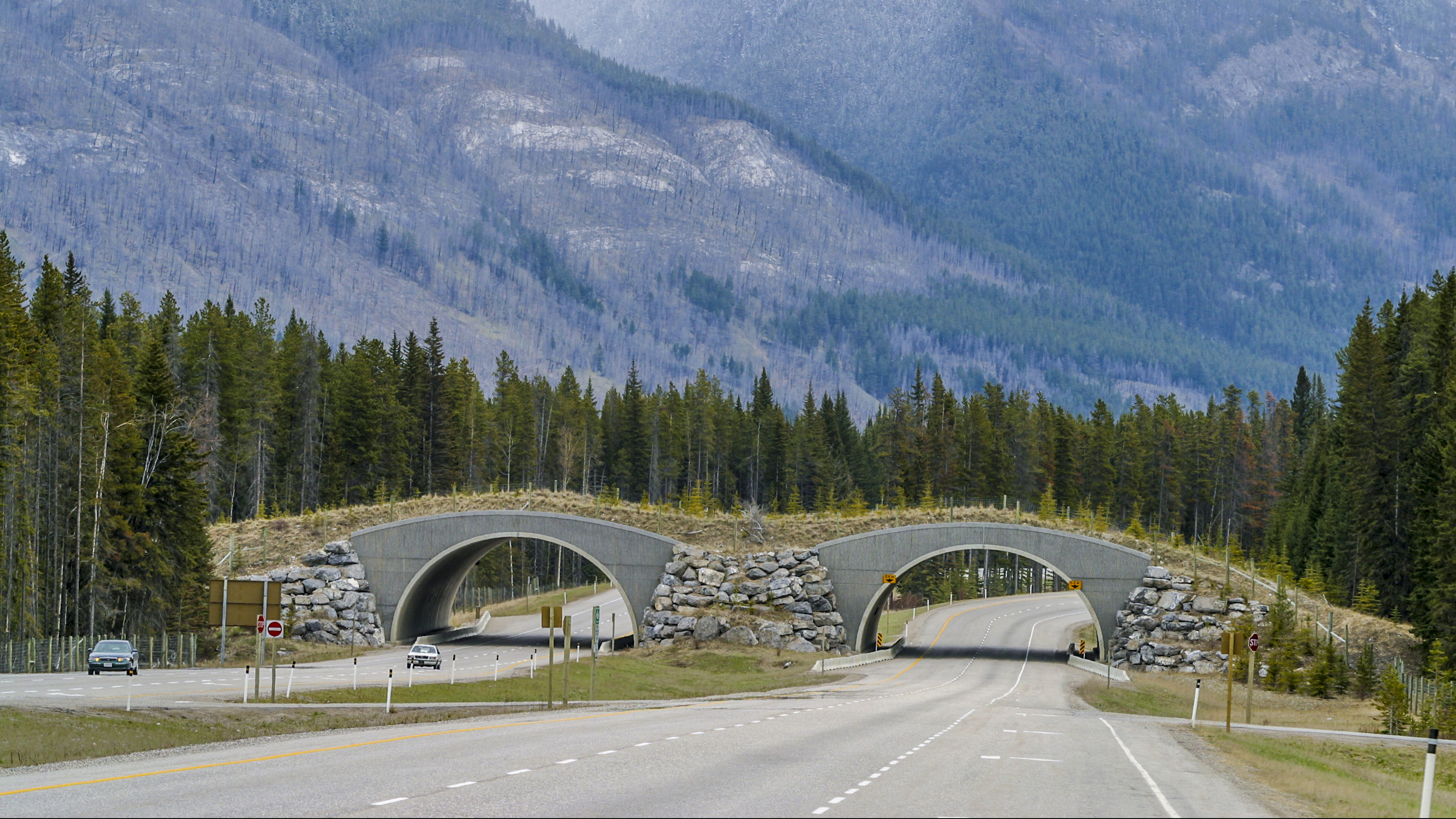Wildlife crossing bridge, Banff, Banff National Park, Alberta, Canada. Several of these bridges cross the Trans-Canada Highway to allow wildlife a safe crossing over the highways.
