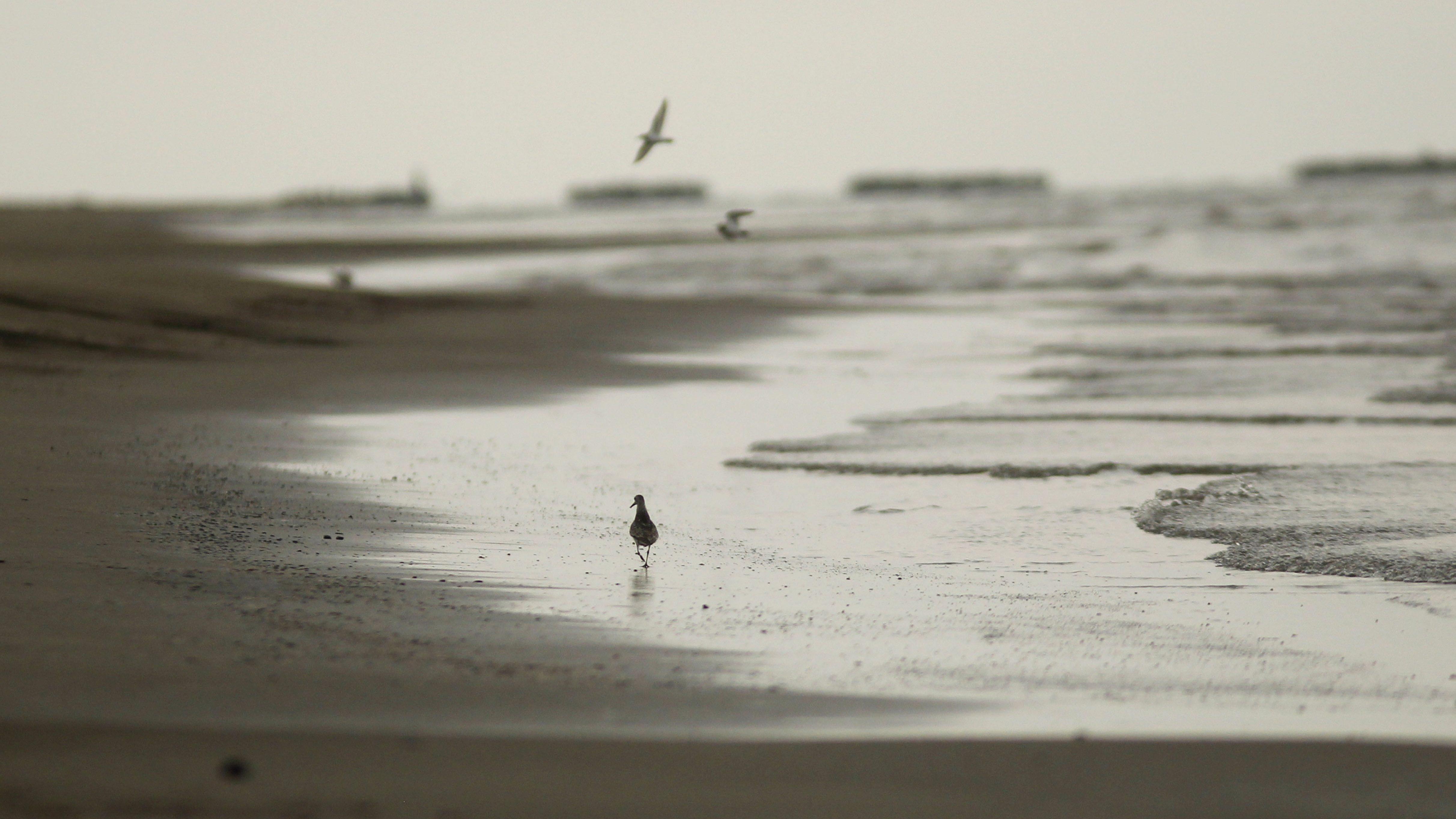A bird walking along a shoreline