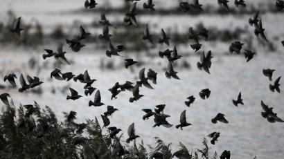 A flock of birds flying away over a river.