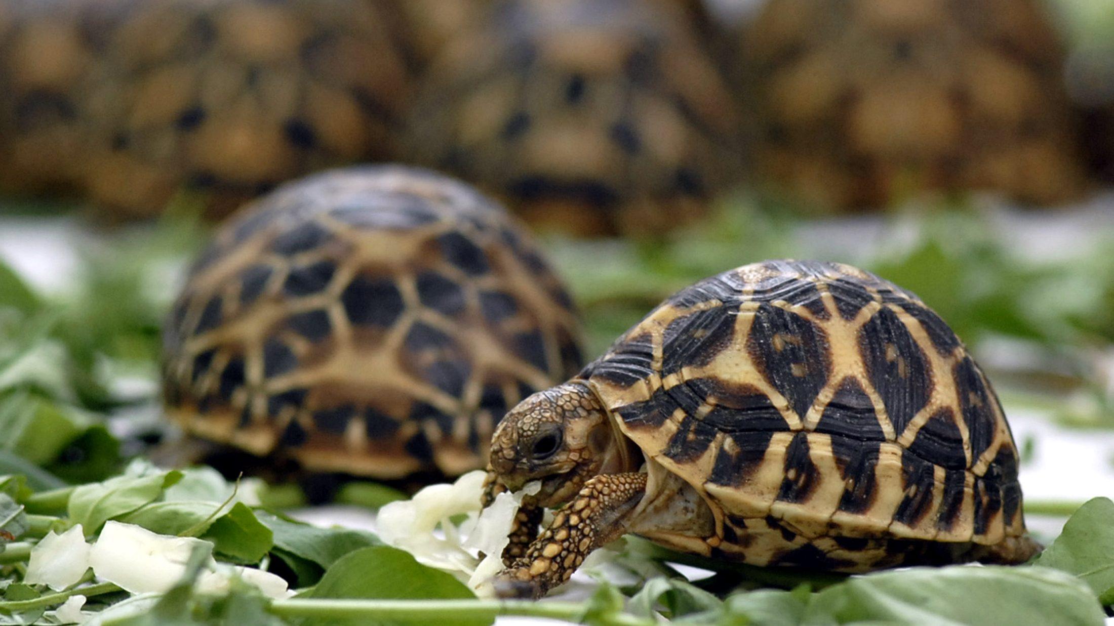 Demand for pets, medicines worsen India's illegal wildlife trade