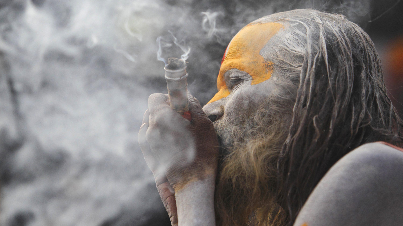 cannabis-india
