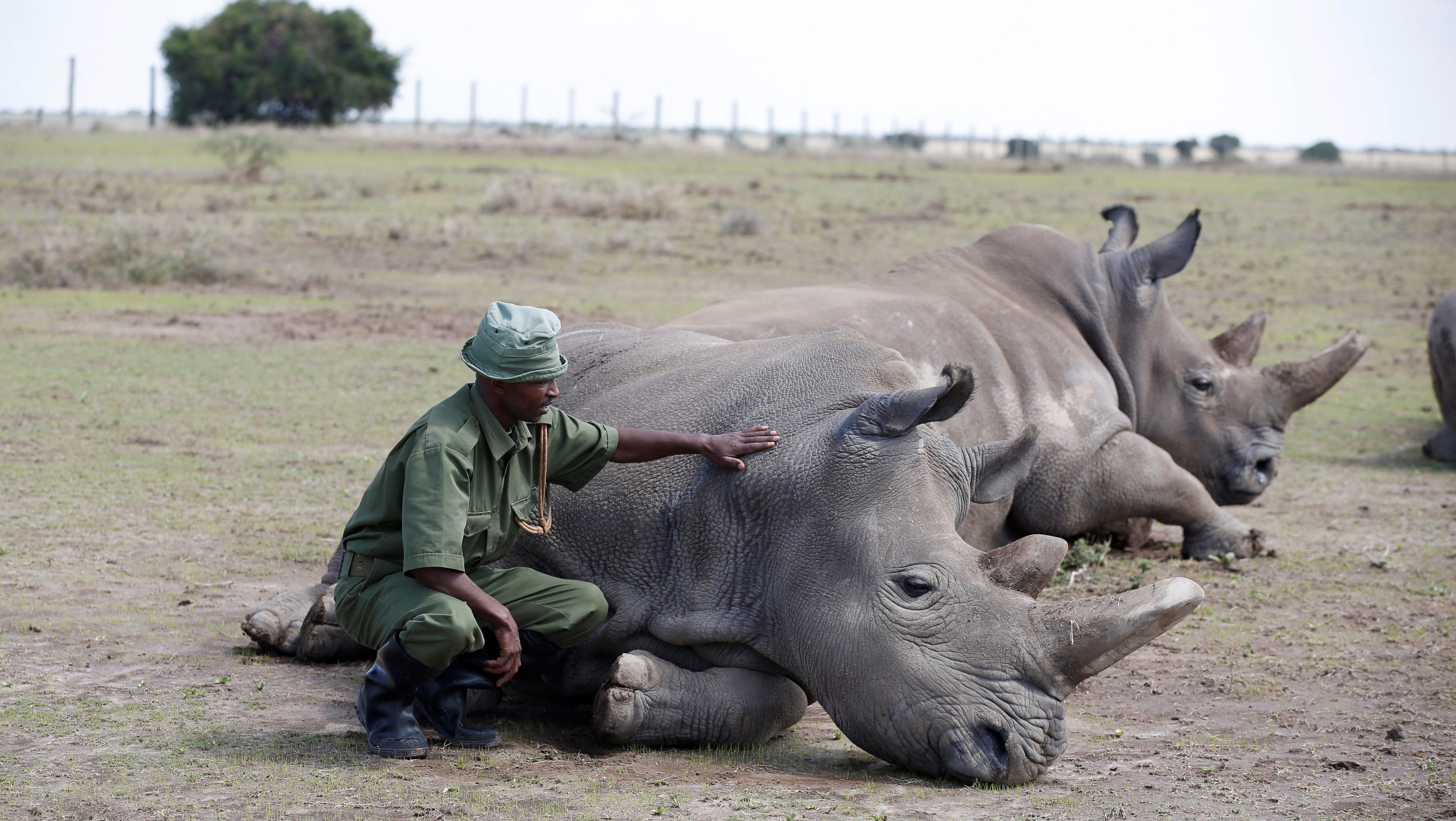Vietnam's rhino horn myth drives African poaching