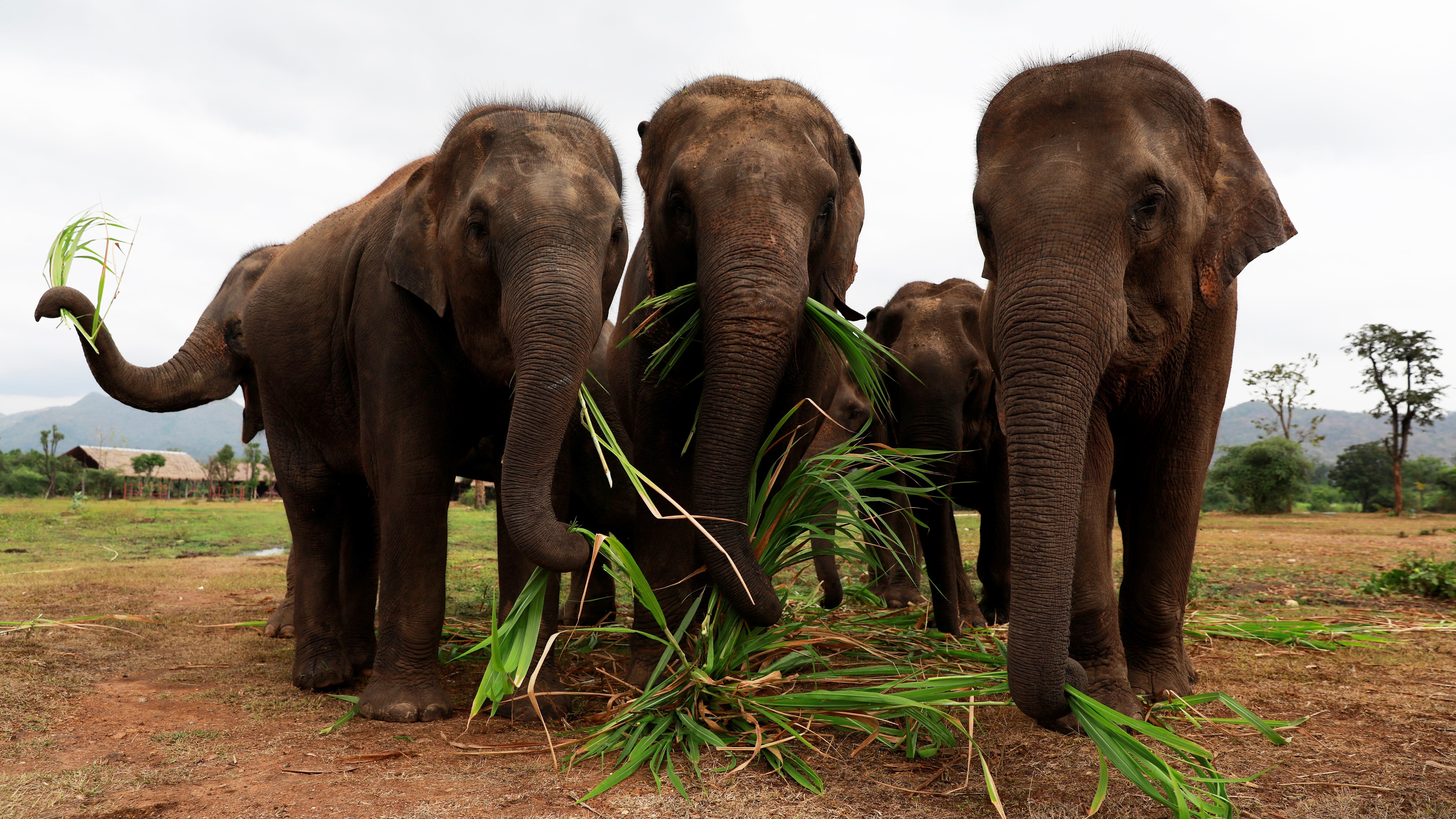 Climate Change Is Creating A New Job For Elephants  Quartz-9020
