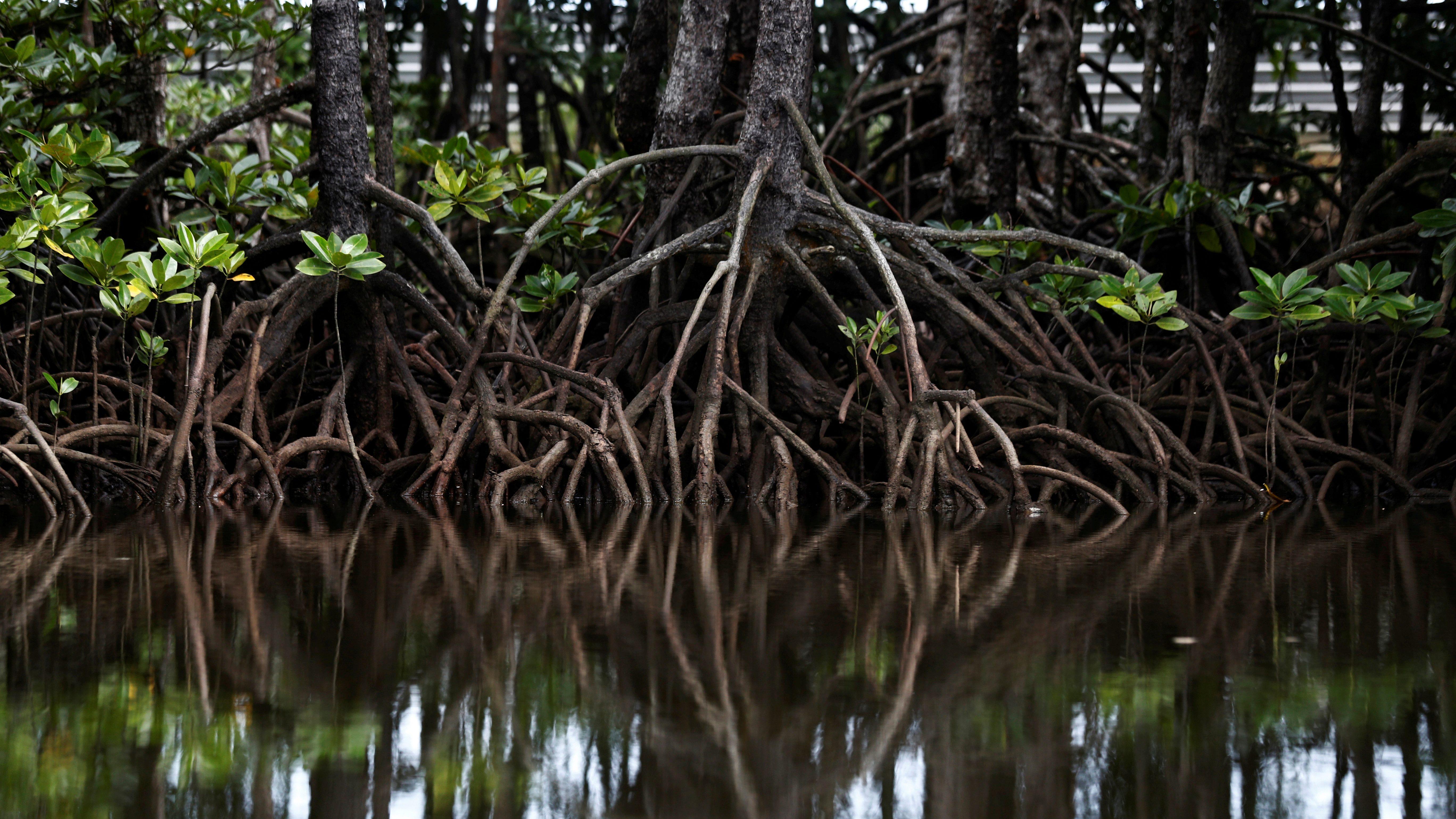 mangrove-india-fani0cyclone