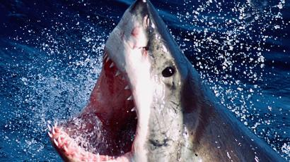 Beachgoers in the US have real life Jaws to fear — Quartz