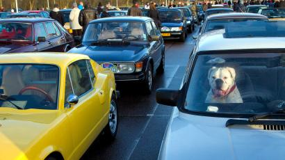 A dog guards his owner's Saab car at a parking lot in Muiden, near Amsterdam,