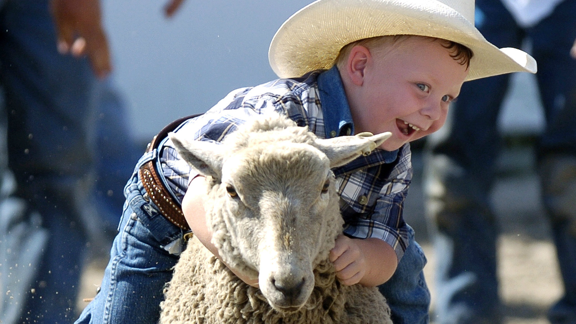 A kid riding a sheep.