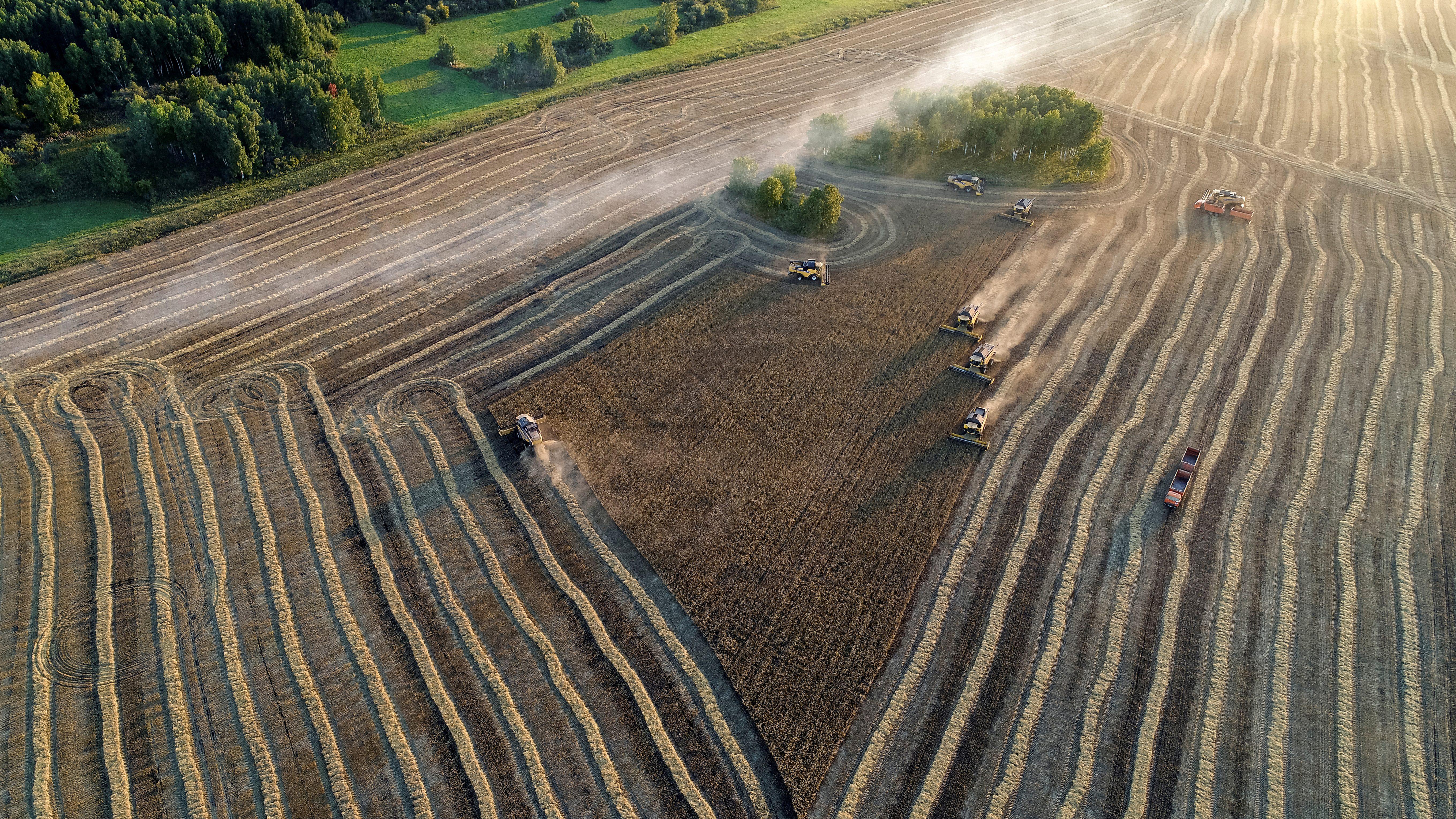 An aerial view shows combines harvesting wheat at the Solgonskoye private farm outside the Siberian village of Talniki in the Krasnoyarsk region