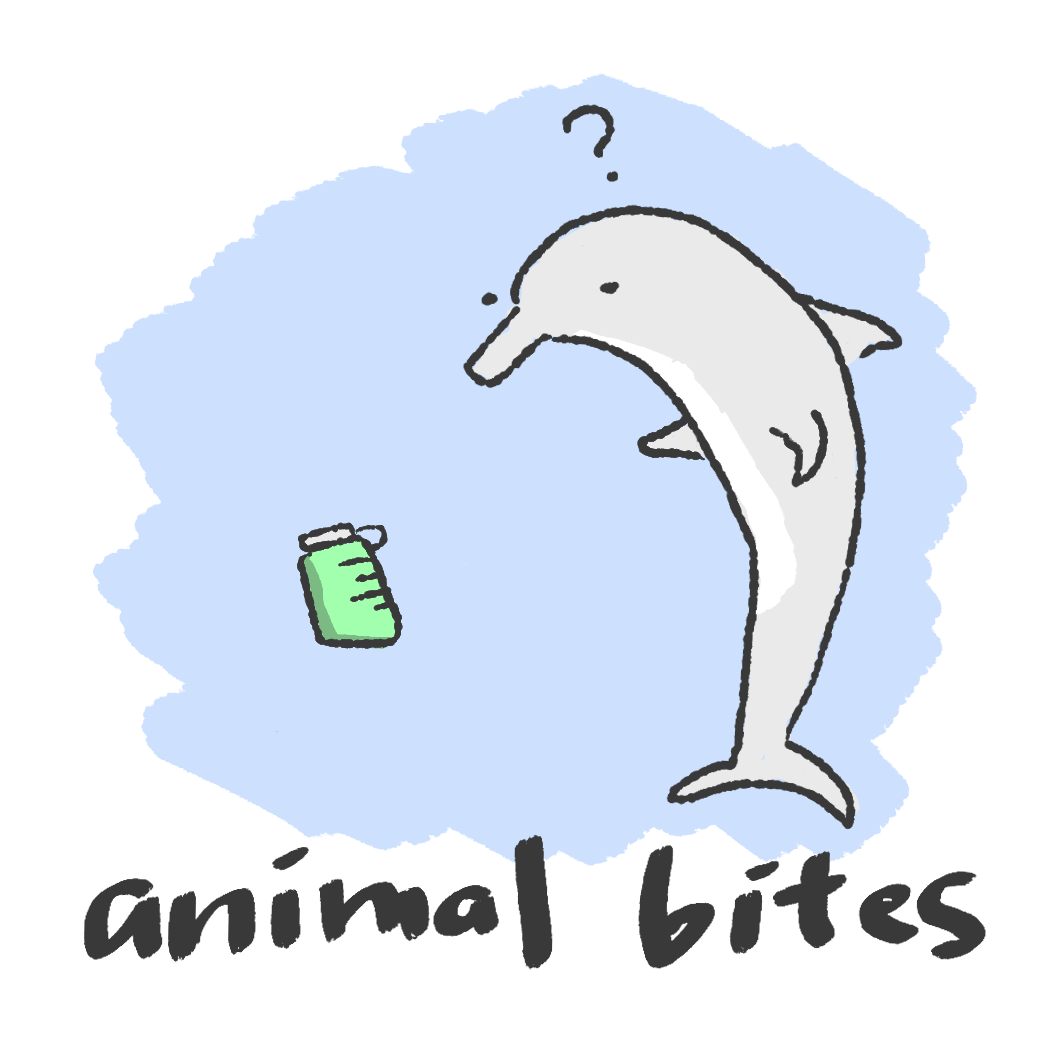 This is an illustration of animal bites changing the shape of plastic. Suspended in the ocean is what looks like a thermos while a dolphin inspects it, quizzically.