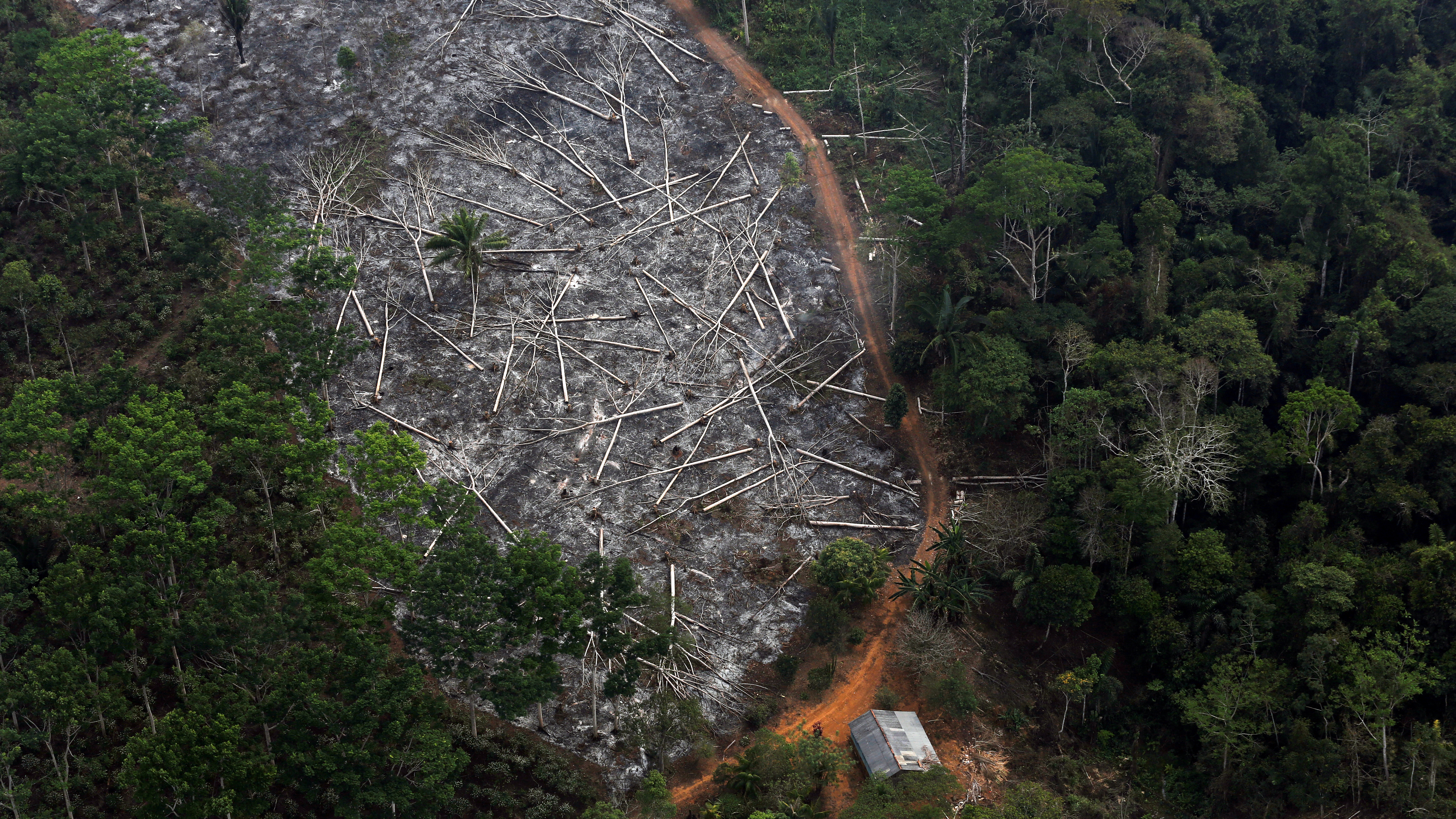 Brazil S Bolsonaro Can T Hide Amazon Deforestation From Satellites