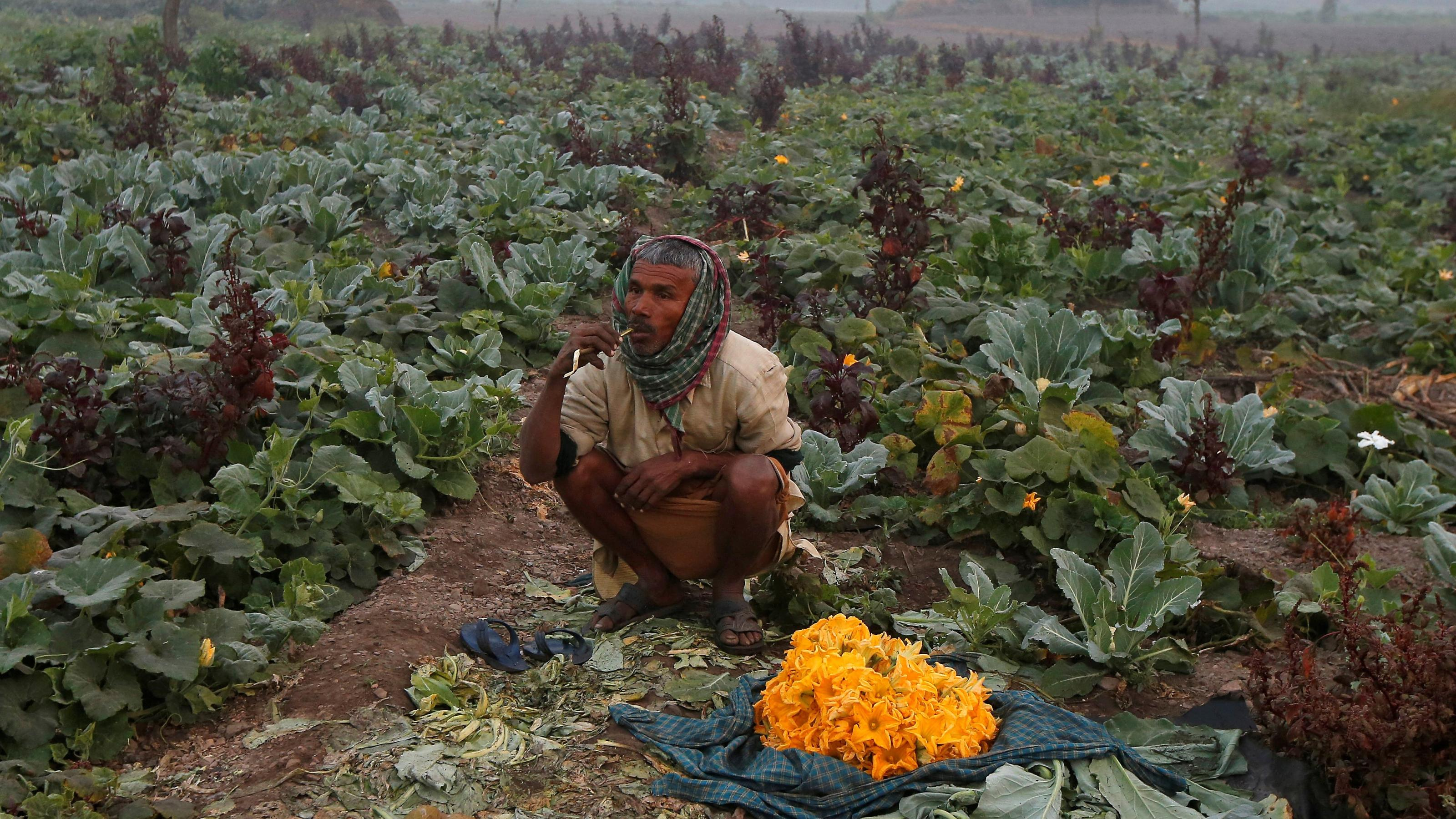 Walmart Foundation is aiding India's farmers with new technology