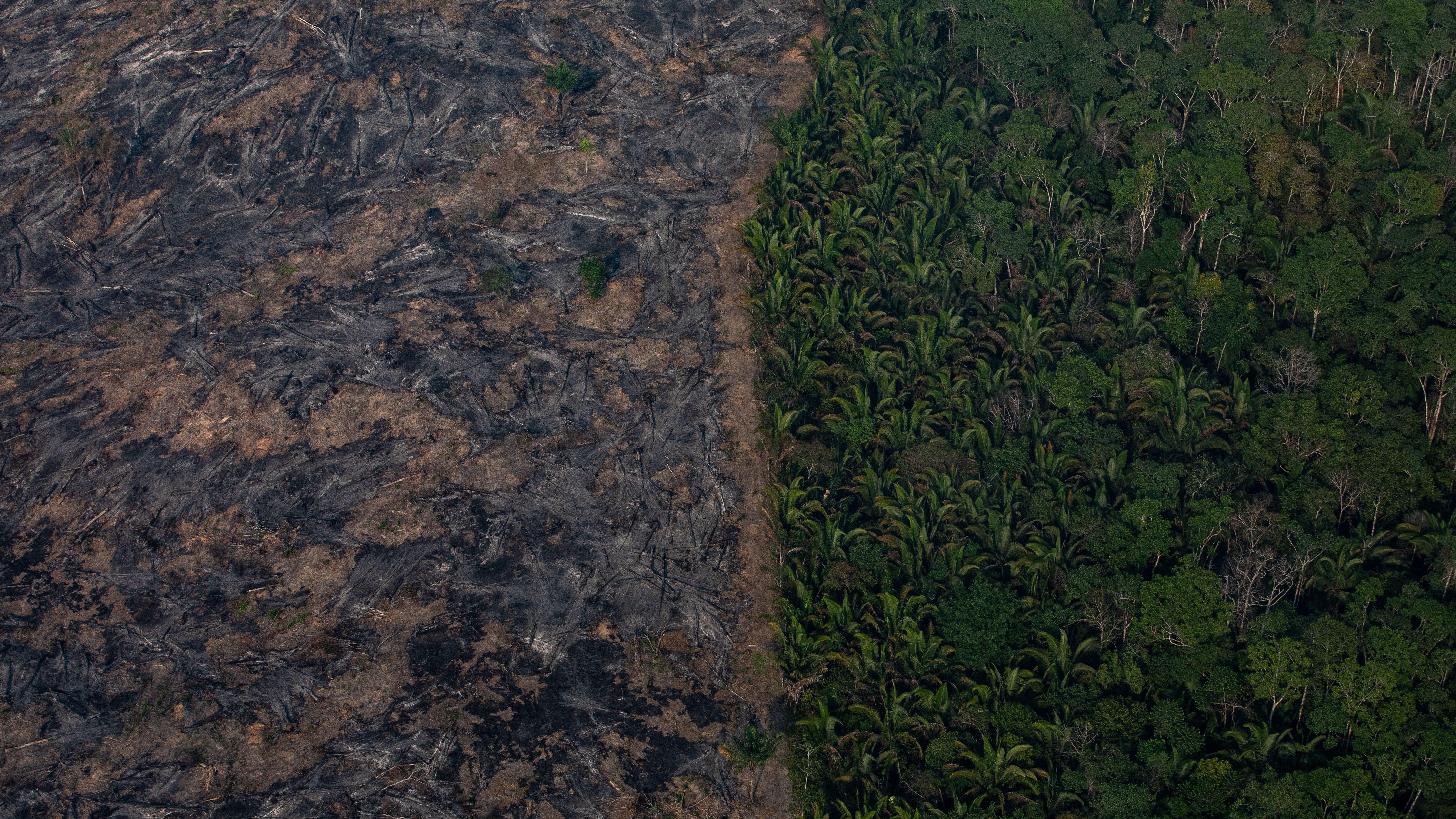 Aerial Photos Show The Destruction Of Amazon Rainforest Fires Quartz