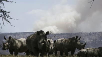 Amazon Fires Not Same As Burning Grasslands In Africa Scientists