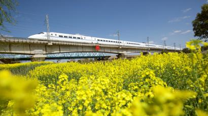 High-speed bullet train travels past a rapeseed or canola field in Haian