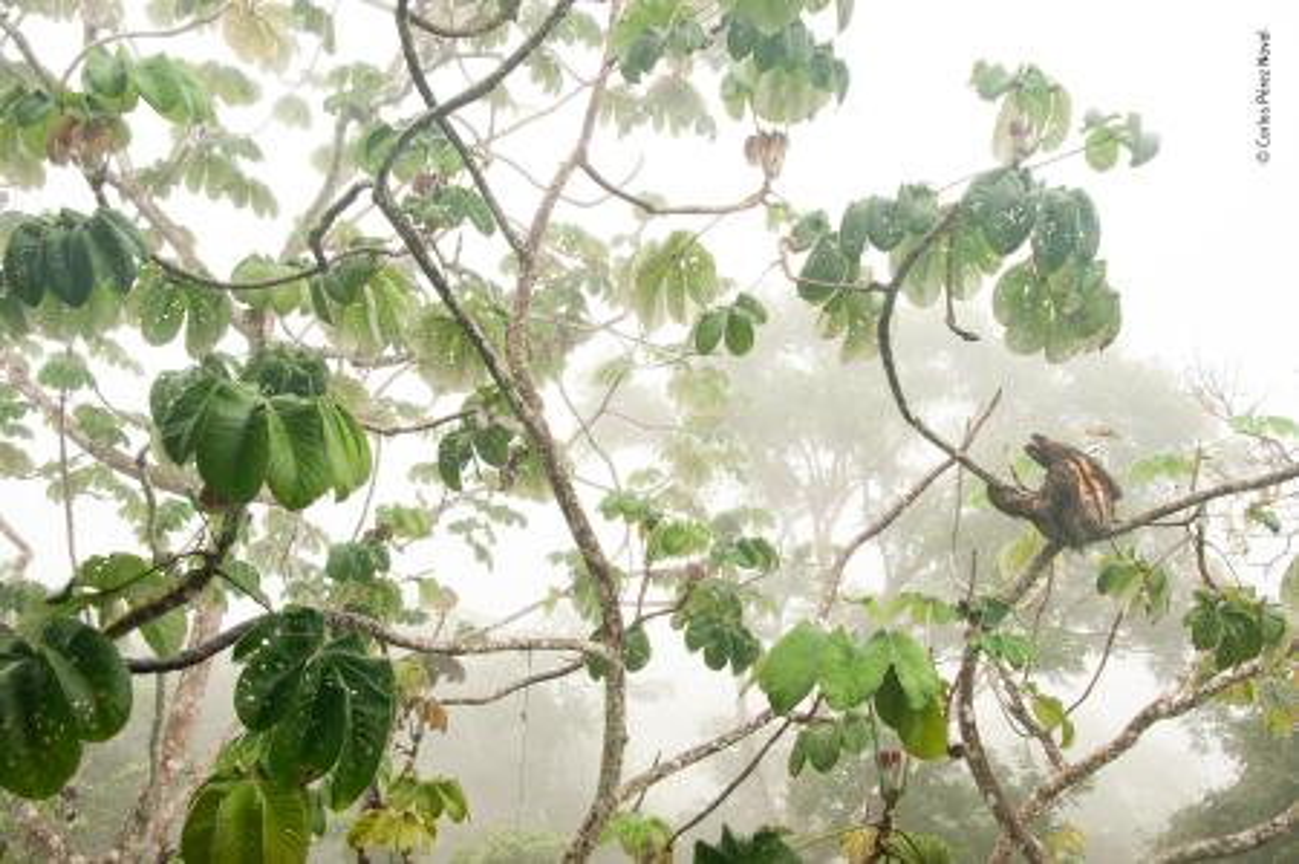 © Carlos Perez Naval - Wildlife Photographer of the Year