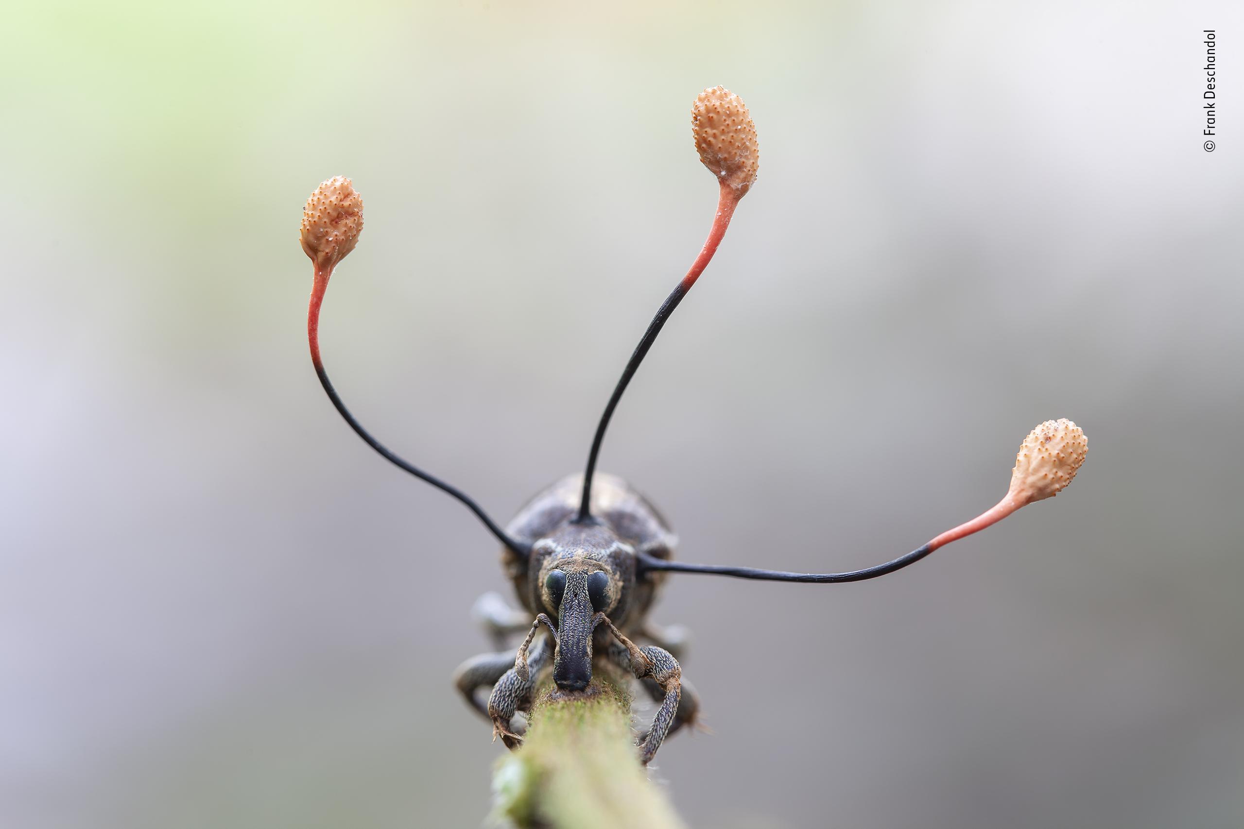 © Frank Deschandol - Wildlife Photographer of the Year