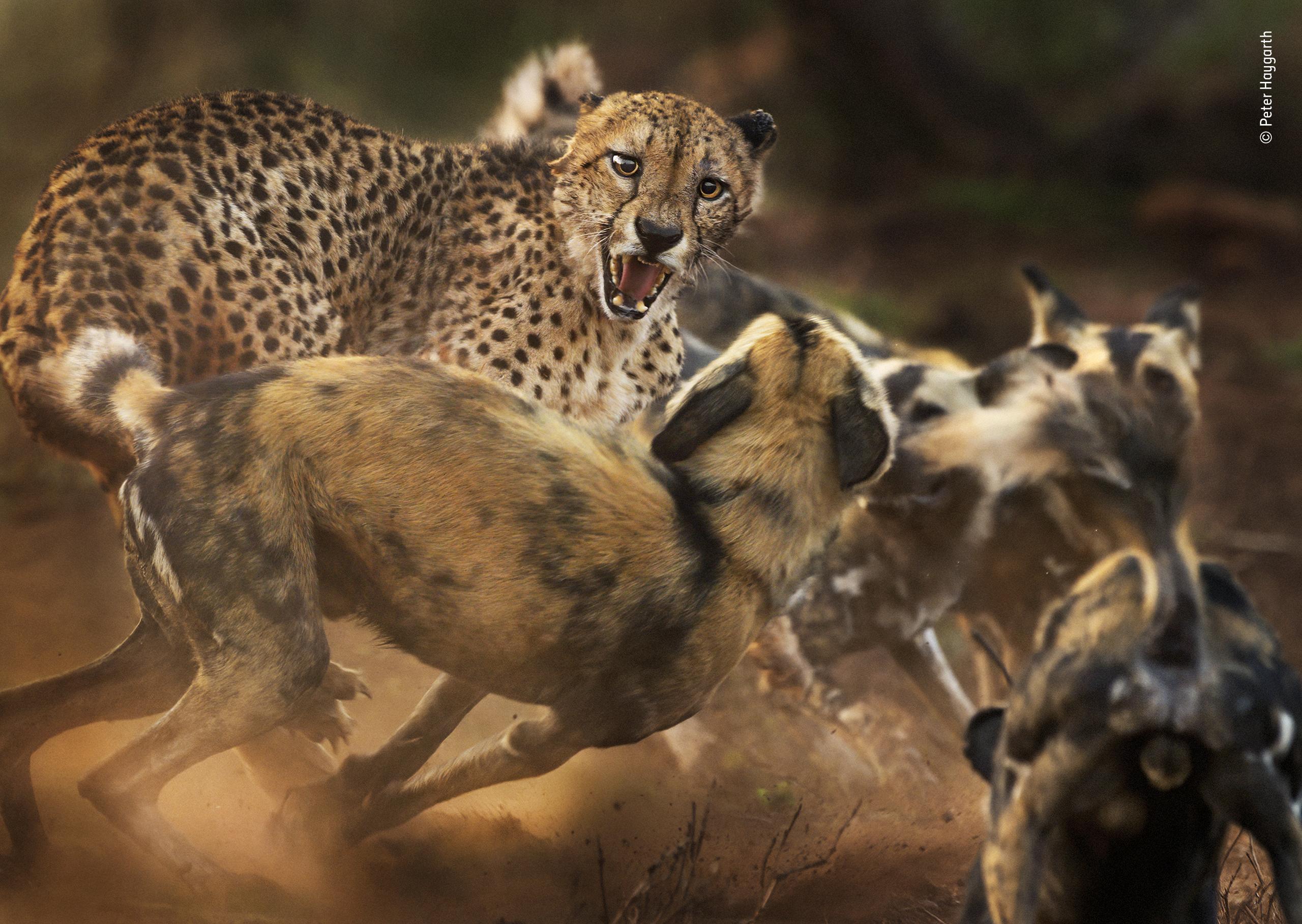 Peter Haygarth/Wildlife Photographer of the Year