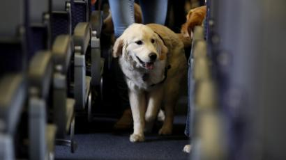 A dog walks the aisle of a passenger jet