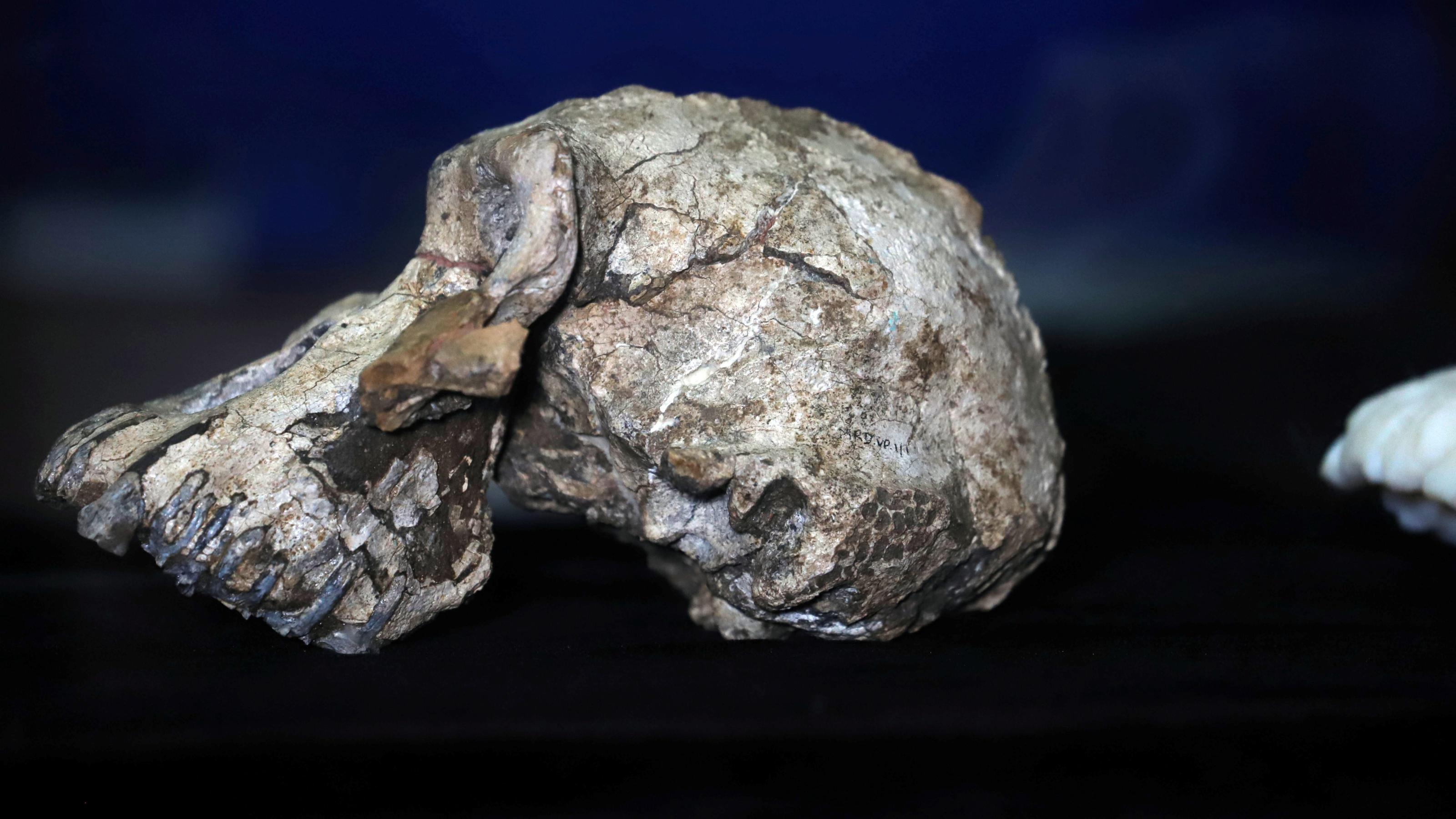 The finding of the oldest human skull changes evolution science
