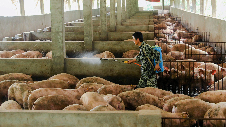 China's pork prices went up 47% in August — Quartz