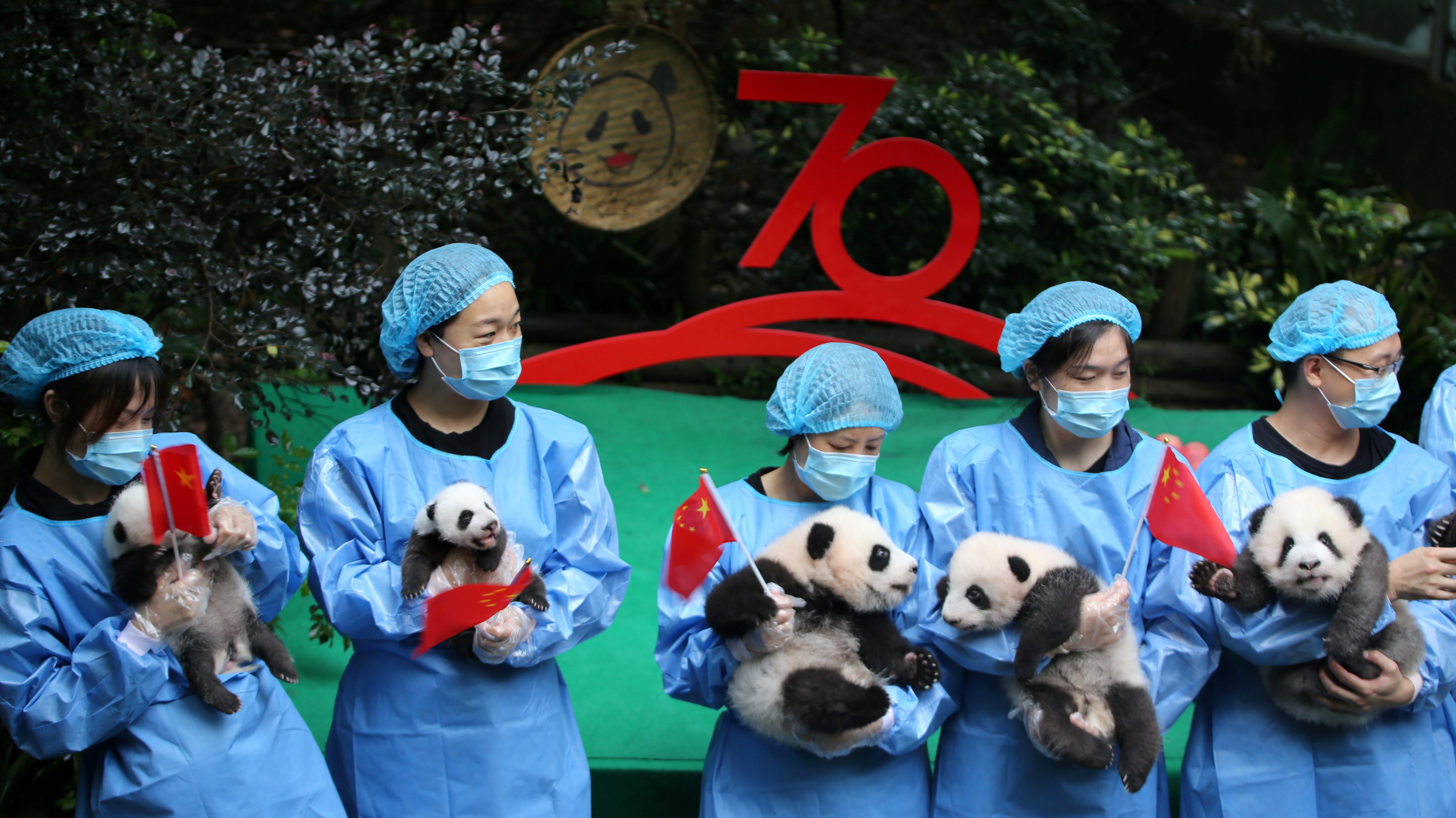 Breeders hold Chinese flags and panda cubs born in 2019 as they pose for pictures during an event marking the upcoming 70th anniversary of the founding of the People's Republic of China at Chengdu Research Base of Giant Panda Breeding in Chengdu, Sichuan province, China September 24, 2019.