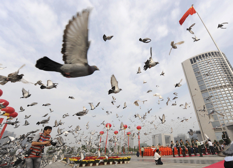 Pigeons in Beijing