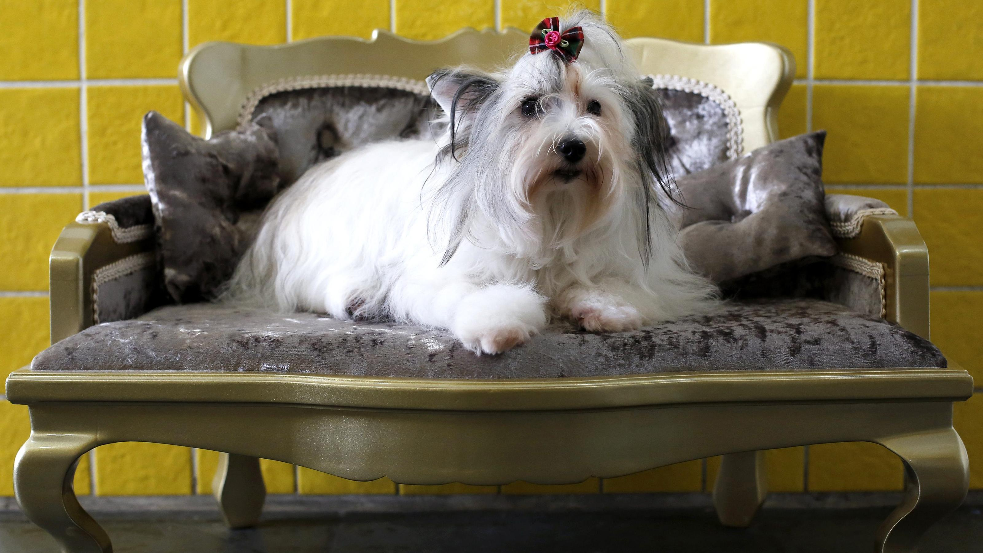India's Heads Up For Tails is betting on luxury pet care