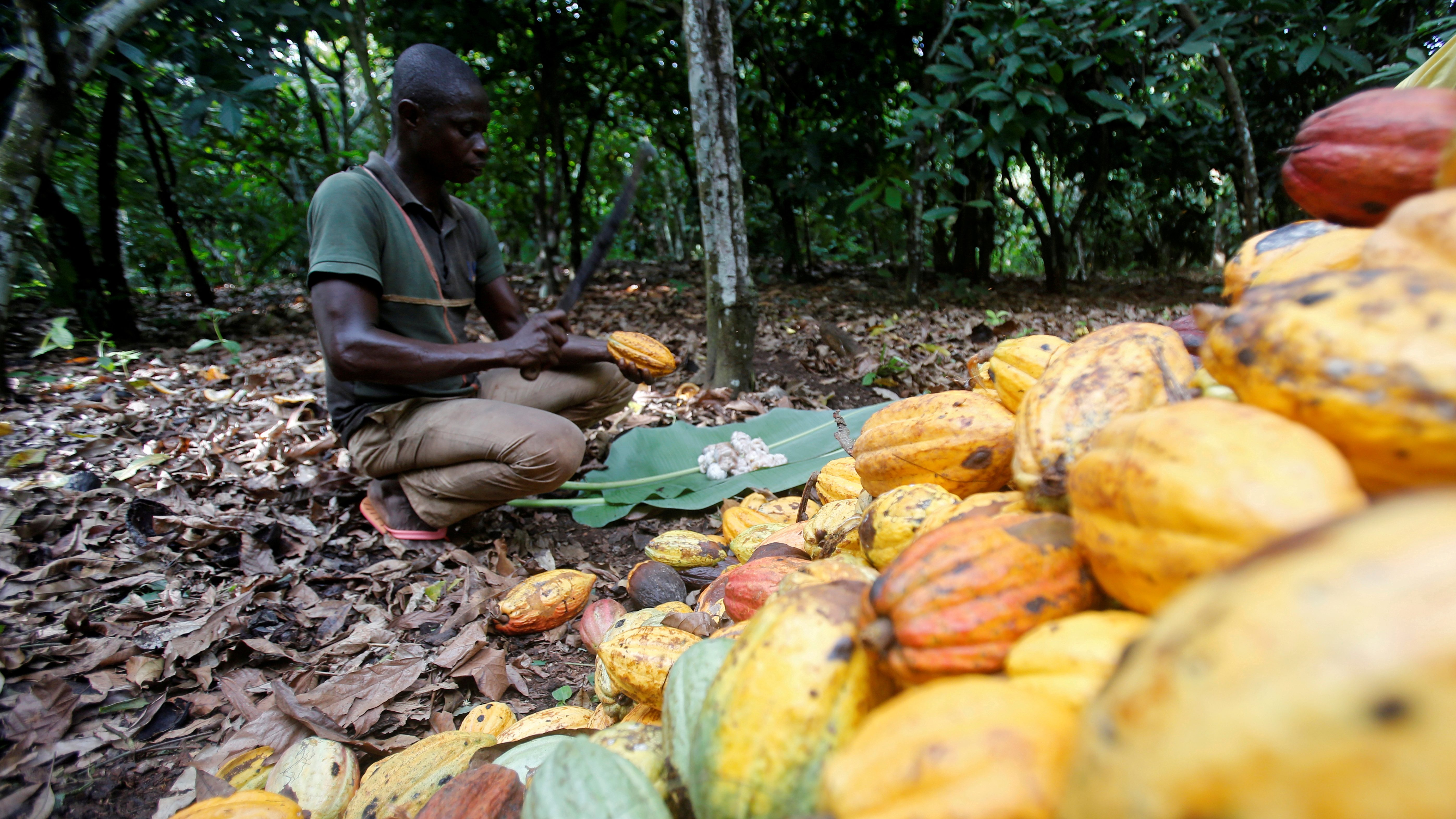 """Ghana and Ivory Coast Massively """"Ripped Off"""" - Out Of The World's Chocolate Billions"""