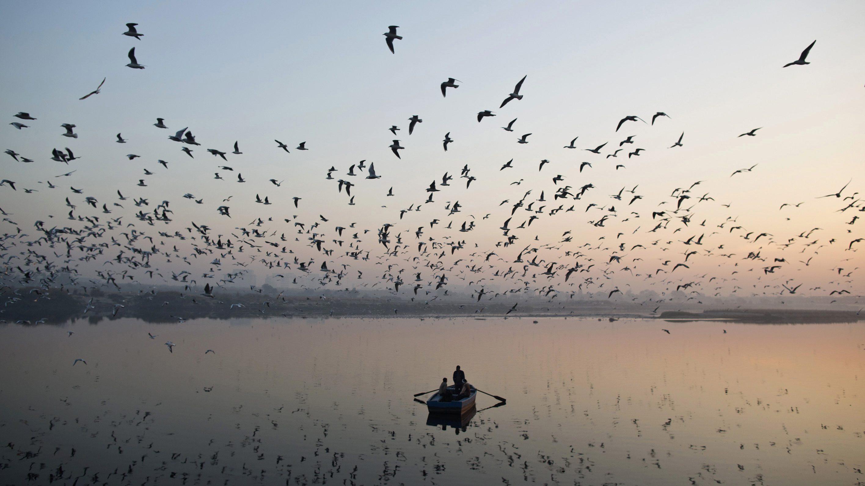 Gurugram, Bengaluru lead in citizens' environmental efforts