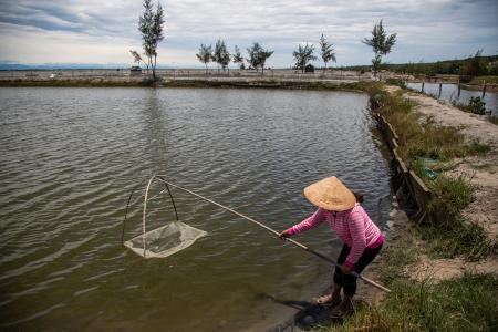 Le Thi Xuan Lan checks on her shrimp farm near her home in the Hai Duong Commune in Hue.