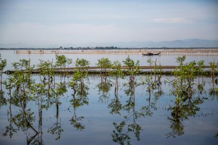 A fishing boat floats past the site of the Hai Duong Commune mangroves