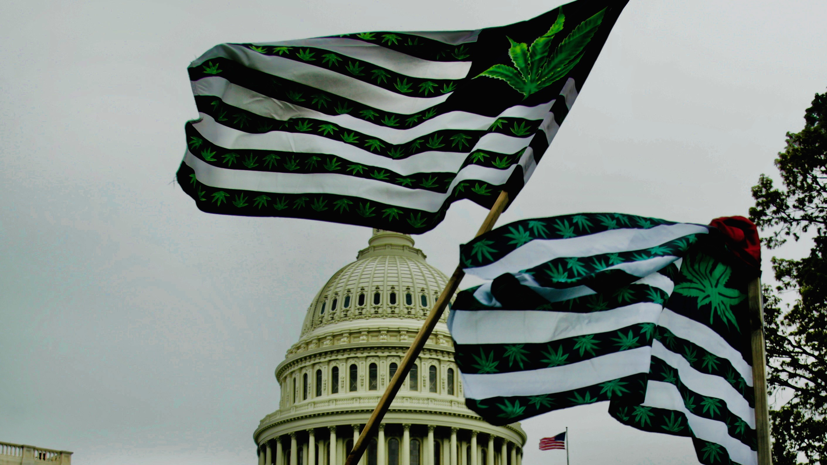 Marijuana flags fly near the Capitol.