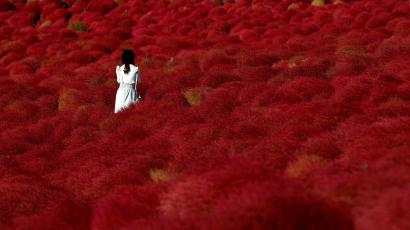 A woman stands in a field of fireweed, or Kochia scoparia, at the Hitachi Seaside Park in Hitachinaka