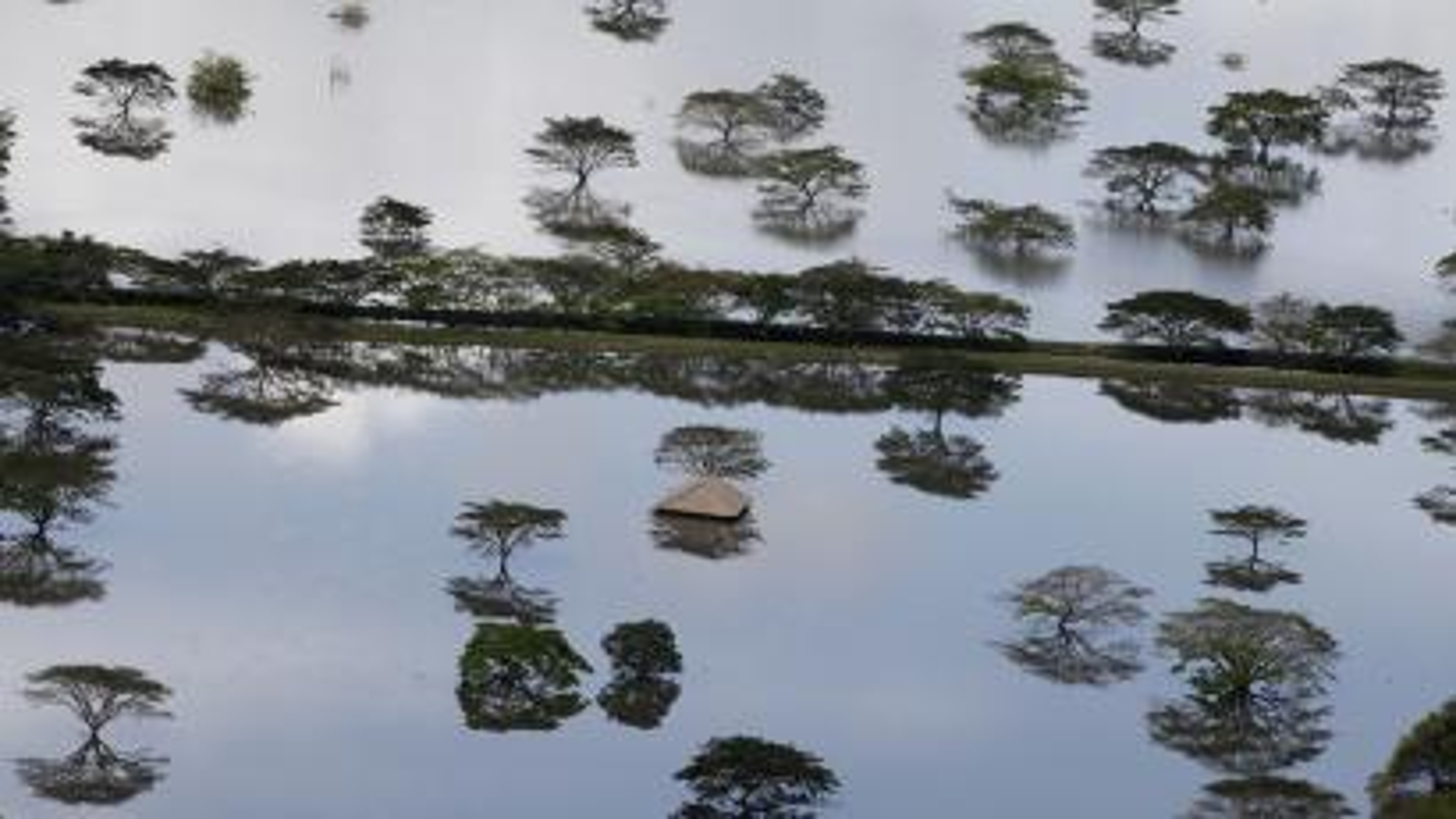 Treetops show in flooded farmland