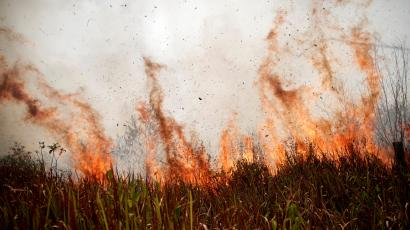 A tract of the Amazon jungle burns