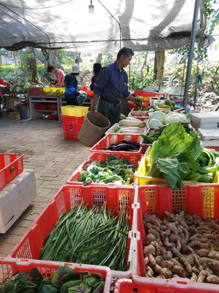 Farmers' market at Mapopo Community Farm in Hong Kong.
