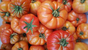 Heirloom tomatoes grown by Mapopo Community Farm in Hong Kong.