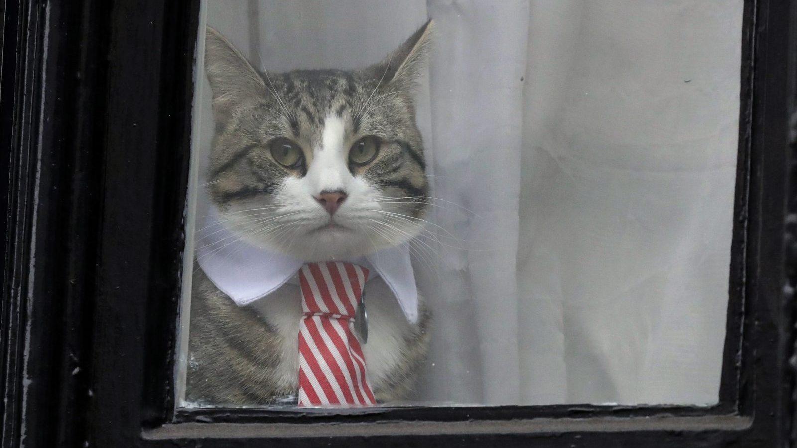 Julian Assange's cat looks out a window dressed in a tie