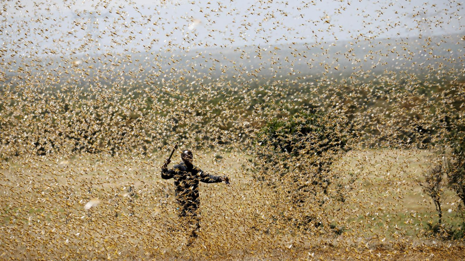 Locusts set to hit Kenya, East Africa again, 400 times stronger ...