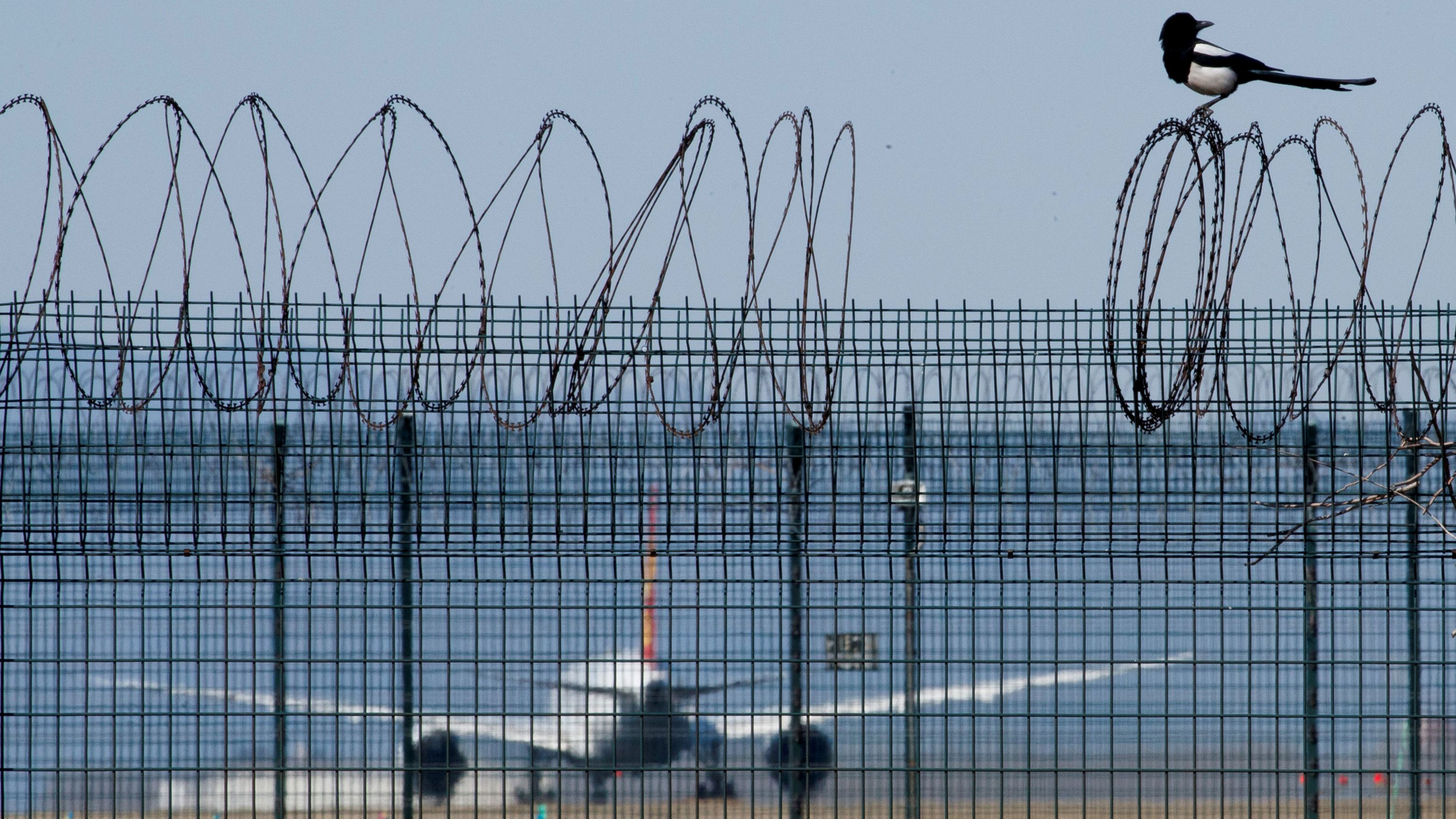 A bird sits on the barbed wire fence surrounding Beijing Capital International Airport as a plane taxies.
