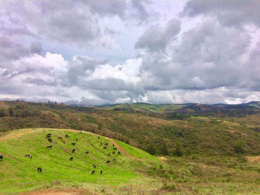 O campo de Antioquia