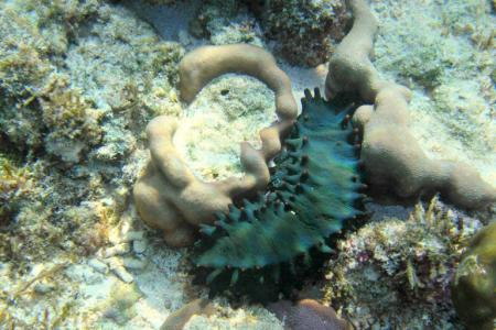 The Lakshadweep administration has created the world's first conservation area for sea cucumbers known as Dr. KK Mohammed Koya Sea Cucumber Conservation Reserve.