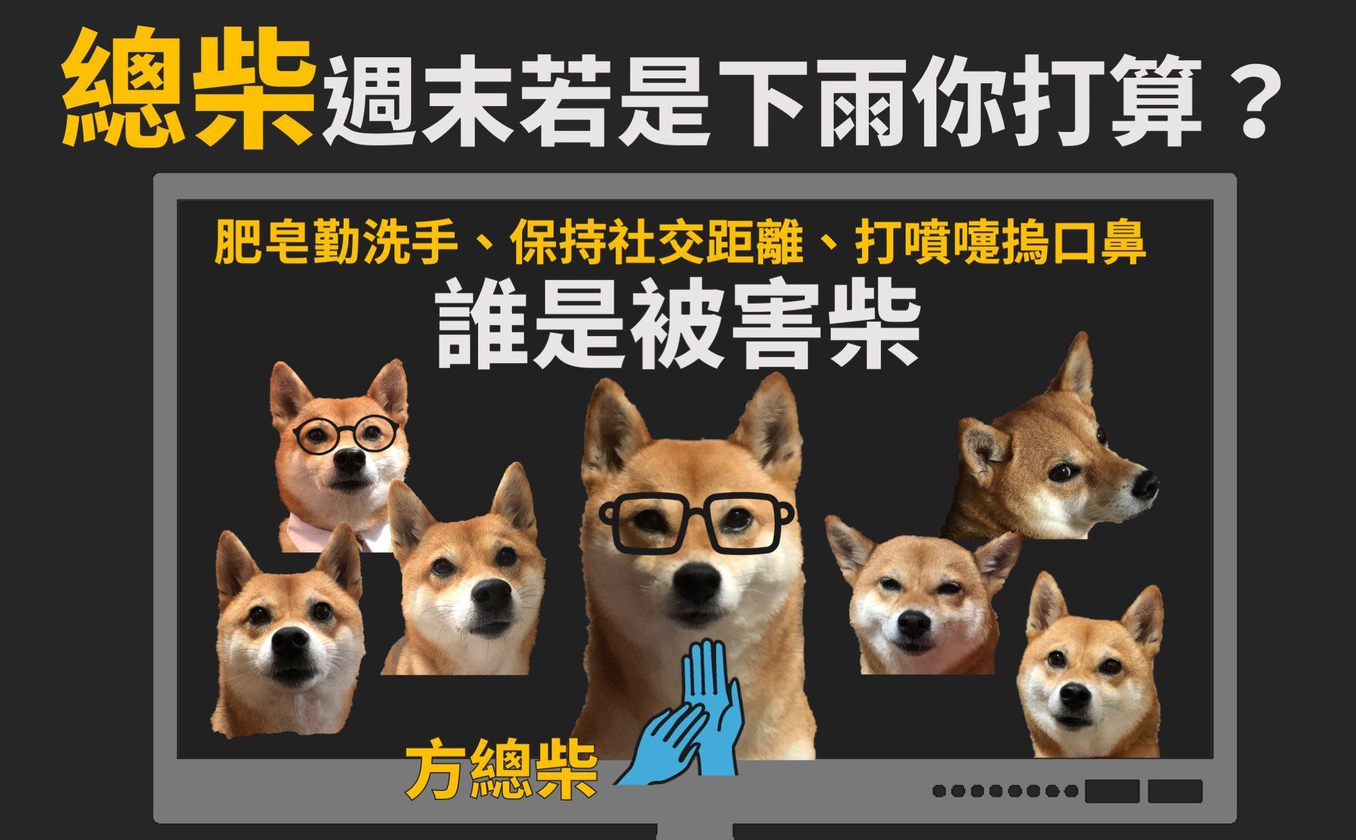 "Taiwan's covid ""spokesdog"""