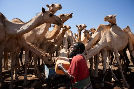A man quenches the thirst of his camels at a water reservoir in Hudur district Somalia