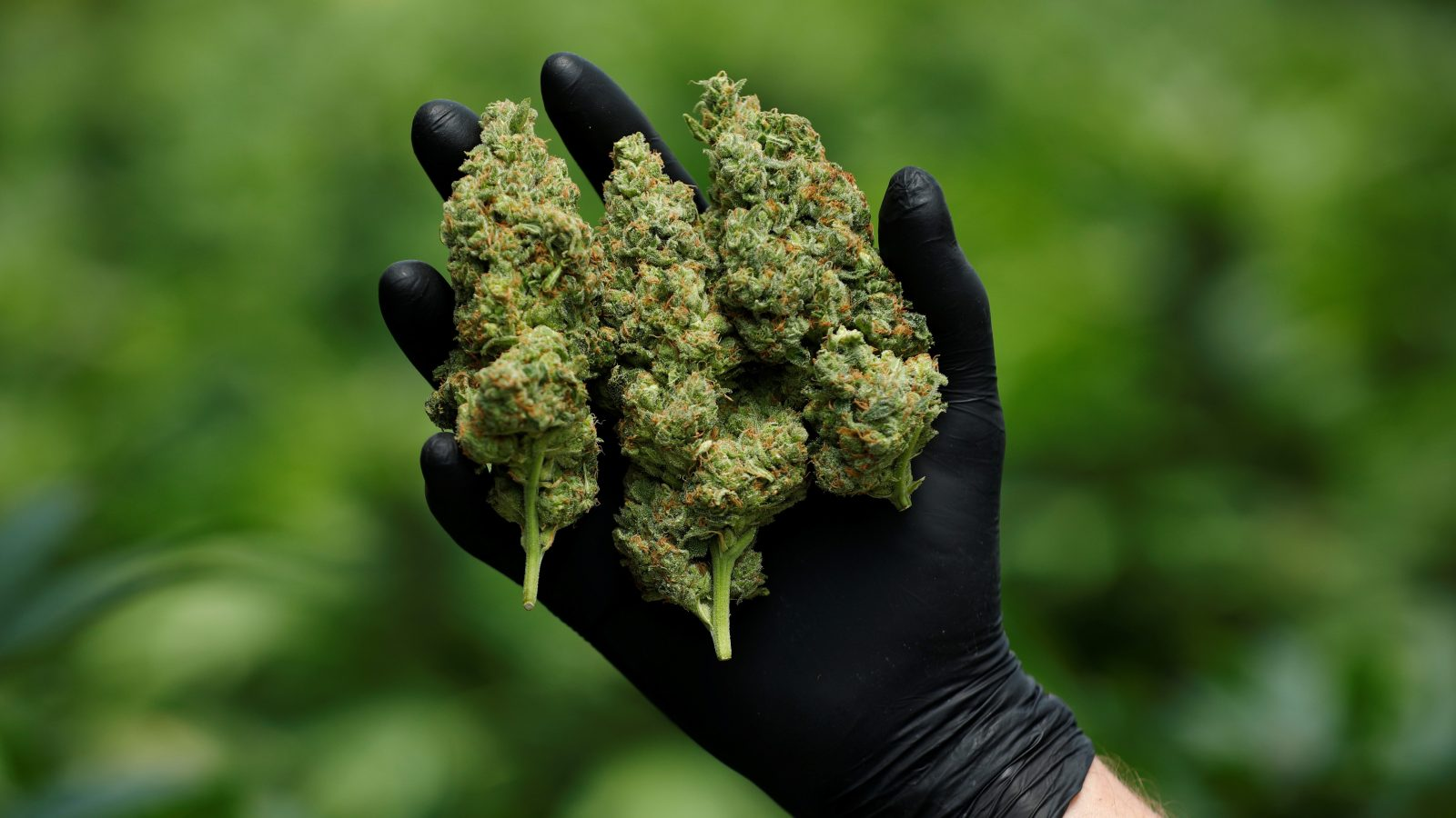 qz.com - Jenni Avins - Does the cannabis industry have a monopoly problem?