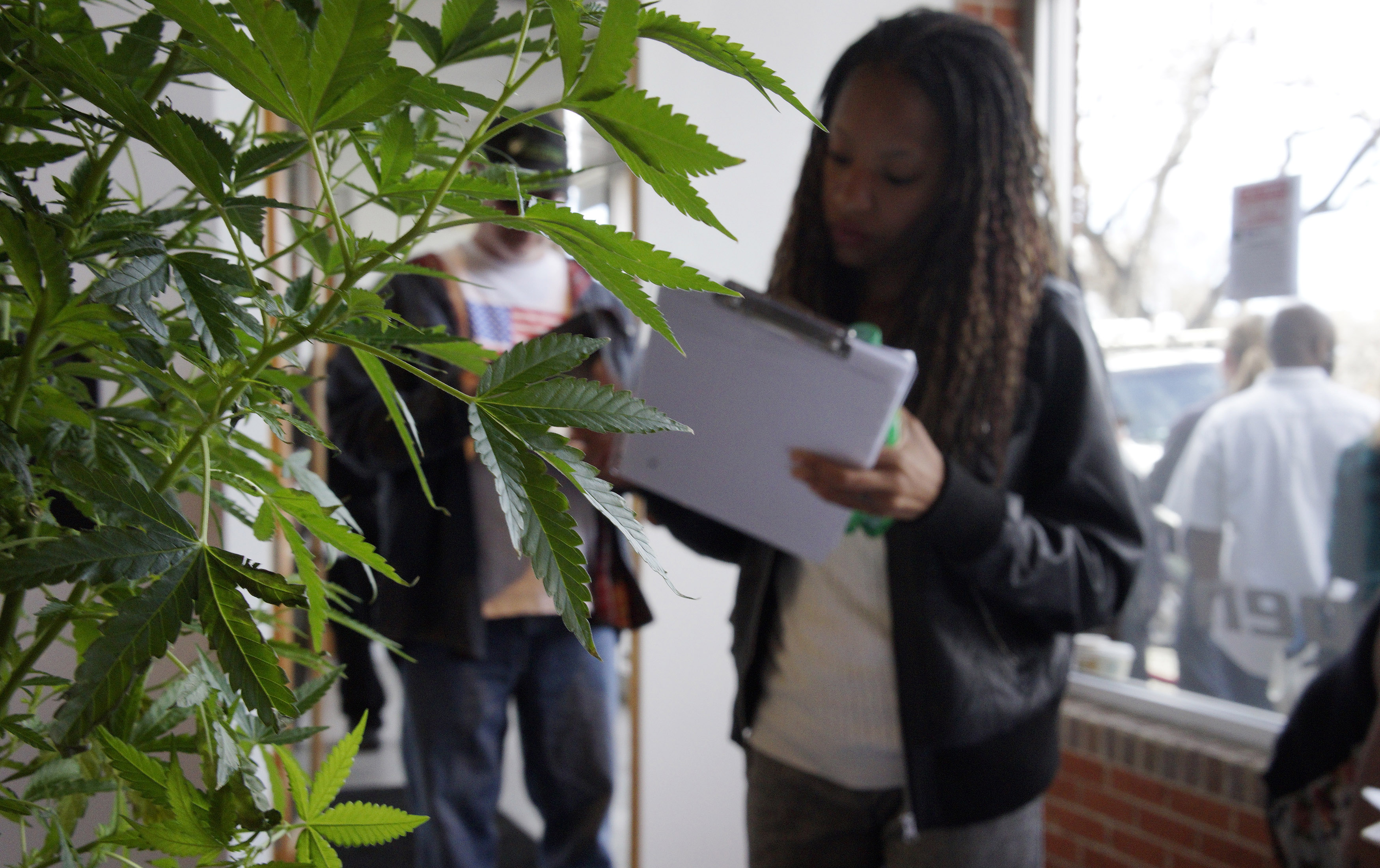 A woman obscured by a cannabis plant looks at a clipboard.