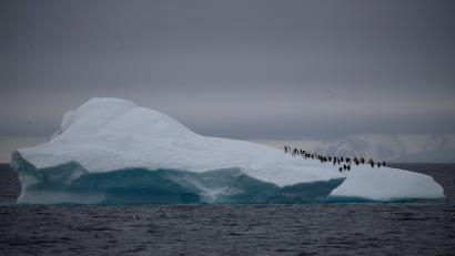 A group of chinstrap penguins walk on top of an iceberg floating near Lemaire Channel, Antarctica, February 6, 2020.