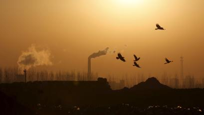 Birds fly over a steel factory against an orange-colored sky