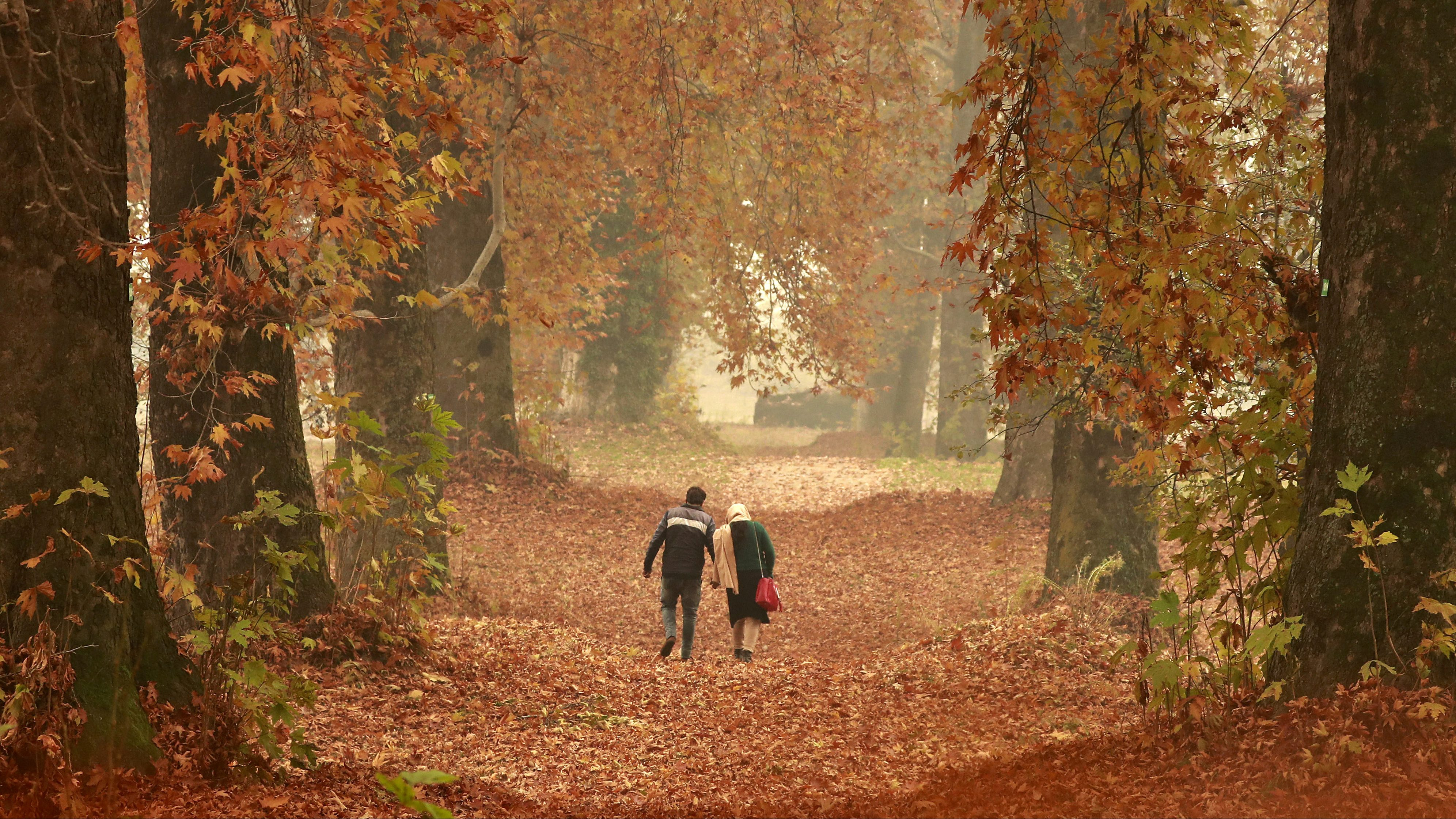 A couple walks amid fallen leaves of Chinar trees in a garden on an autumn day.